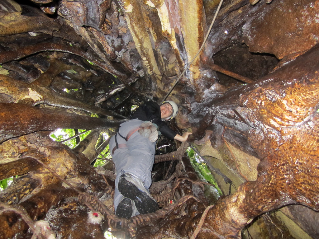 Climbing inside a strangler tree in Costa Rica