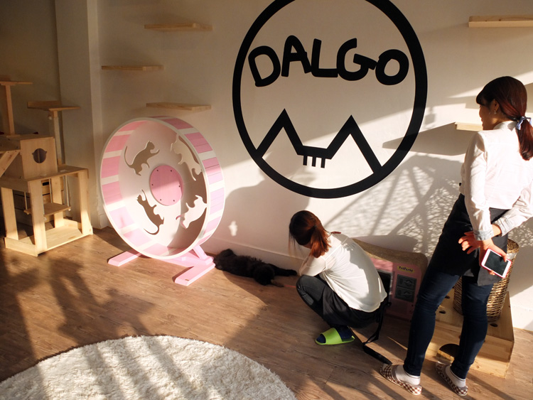 Dalgo Cat Cafe