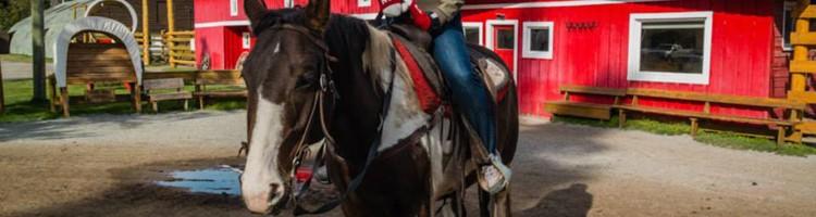 Banff Horseback Riding   SuitcaseandHeels.com