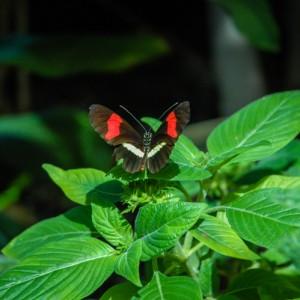 Butterflies | SuitcaseandHeels.com