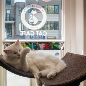 Montreal Cat Cafe | SuitcaseandHeels.com