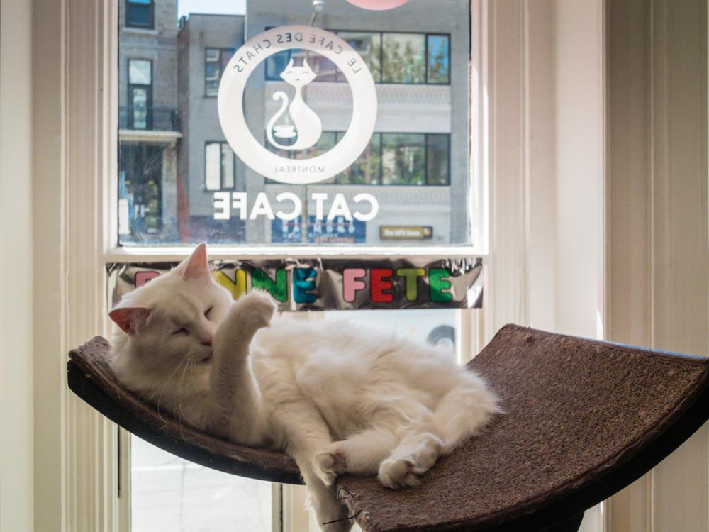 Montreal Cat Cafe | SuitcaseandHeels.com