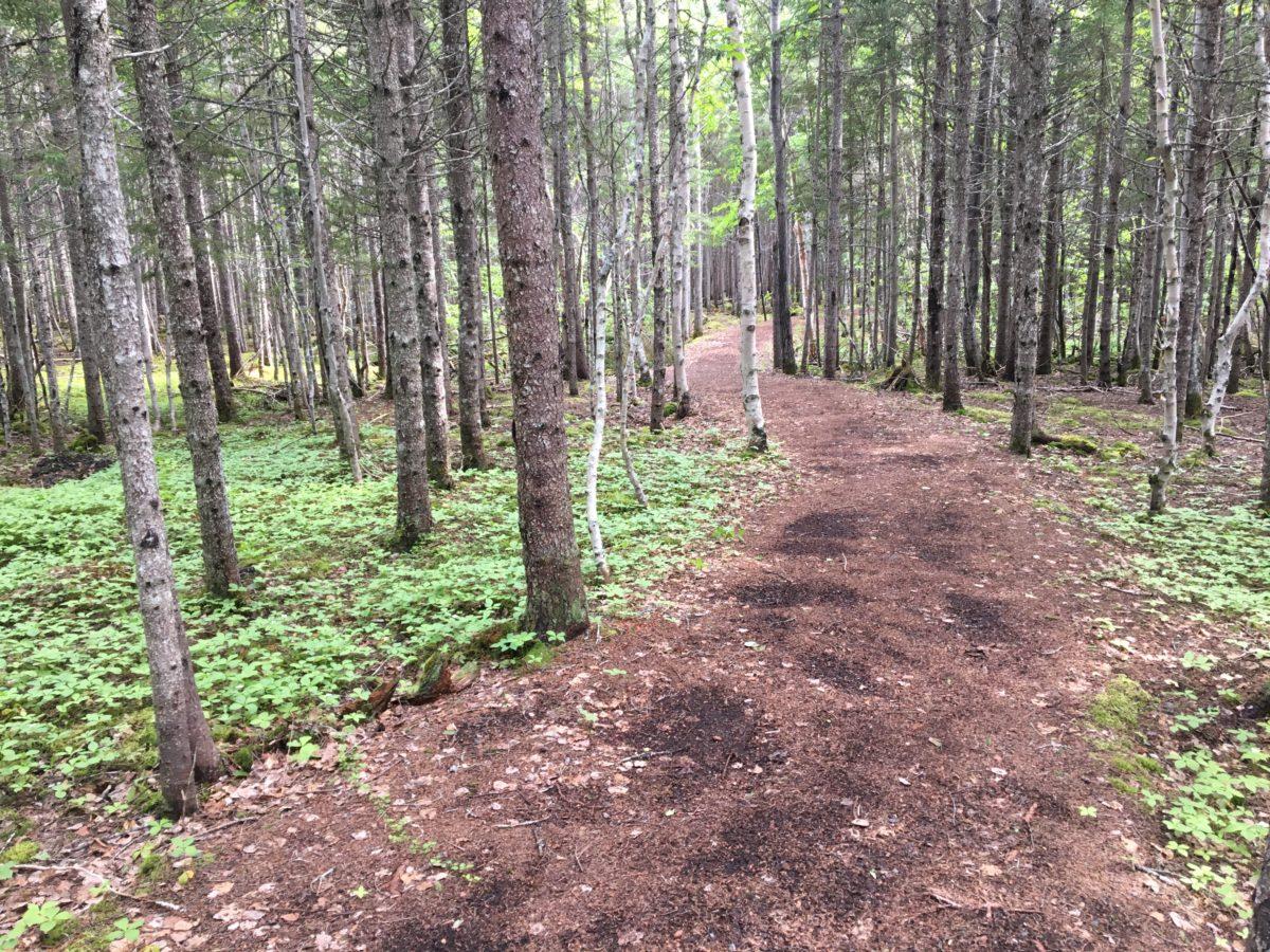 Carmanville Wetland Trail