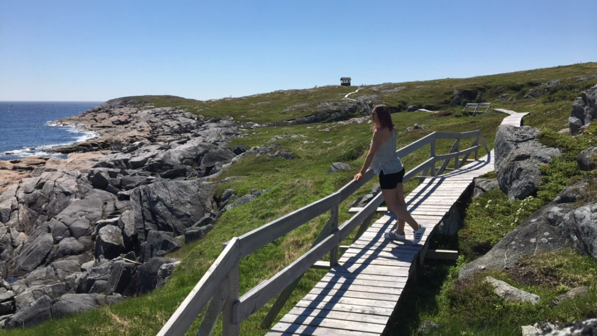 Guide to the Kittiwake Coast Newfoundland Road Trips