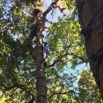Tree Climbing in Monteverde