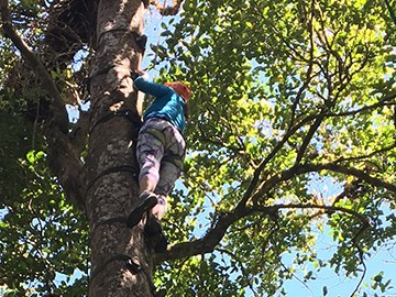 Tree Climbing in Monteverde