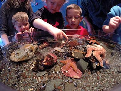 Petty Harbour Mini Aquarium