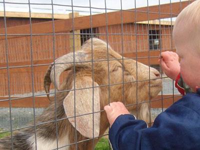 Lesters Petting Barn