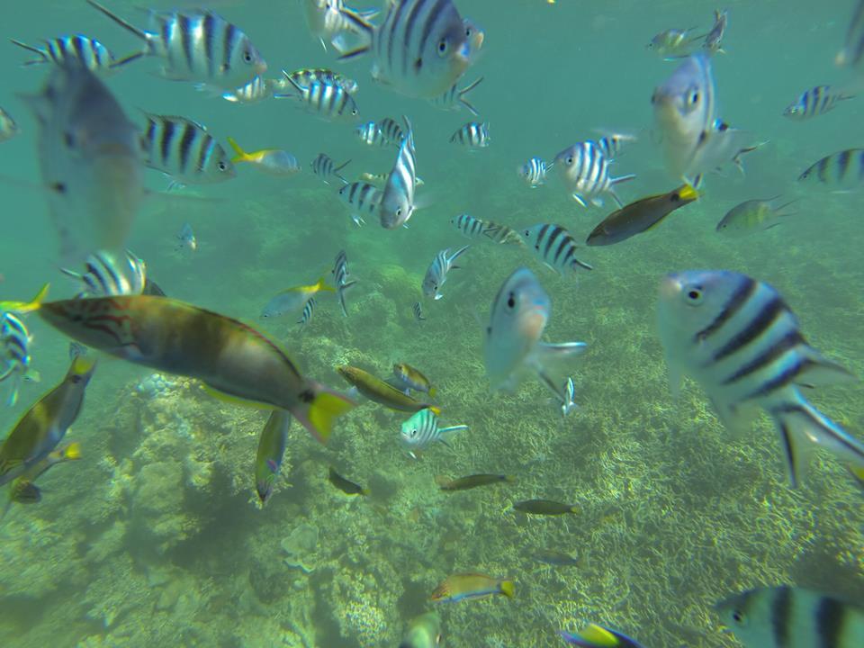 El Nido Diving