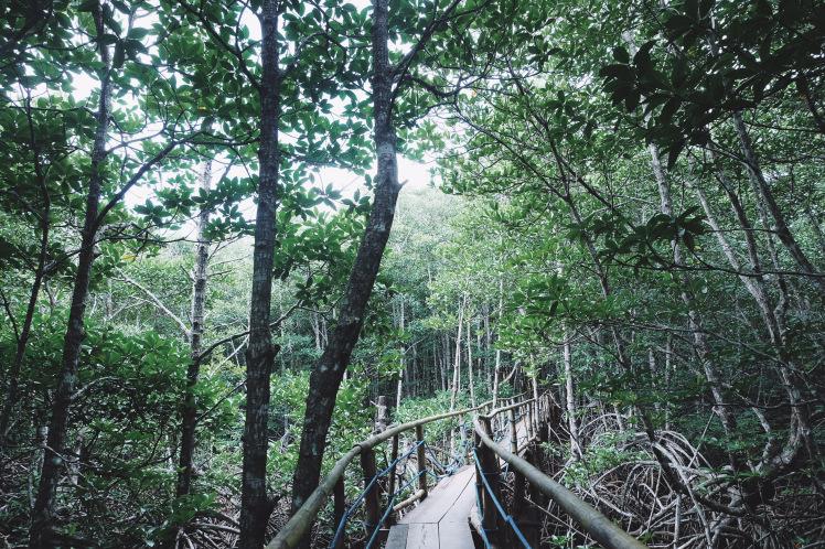 Mangrove Ecopark