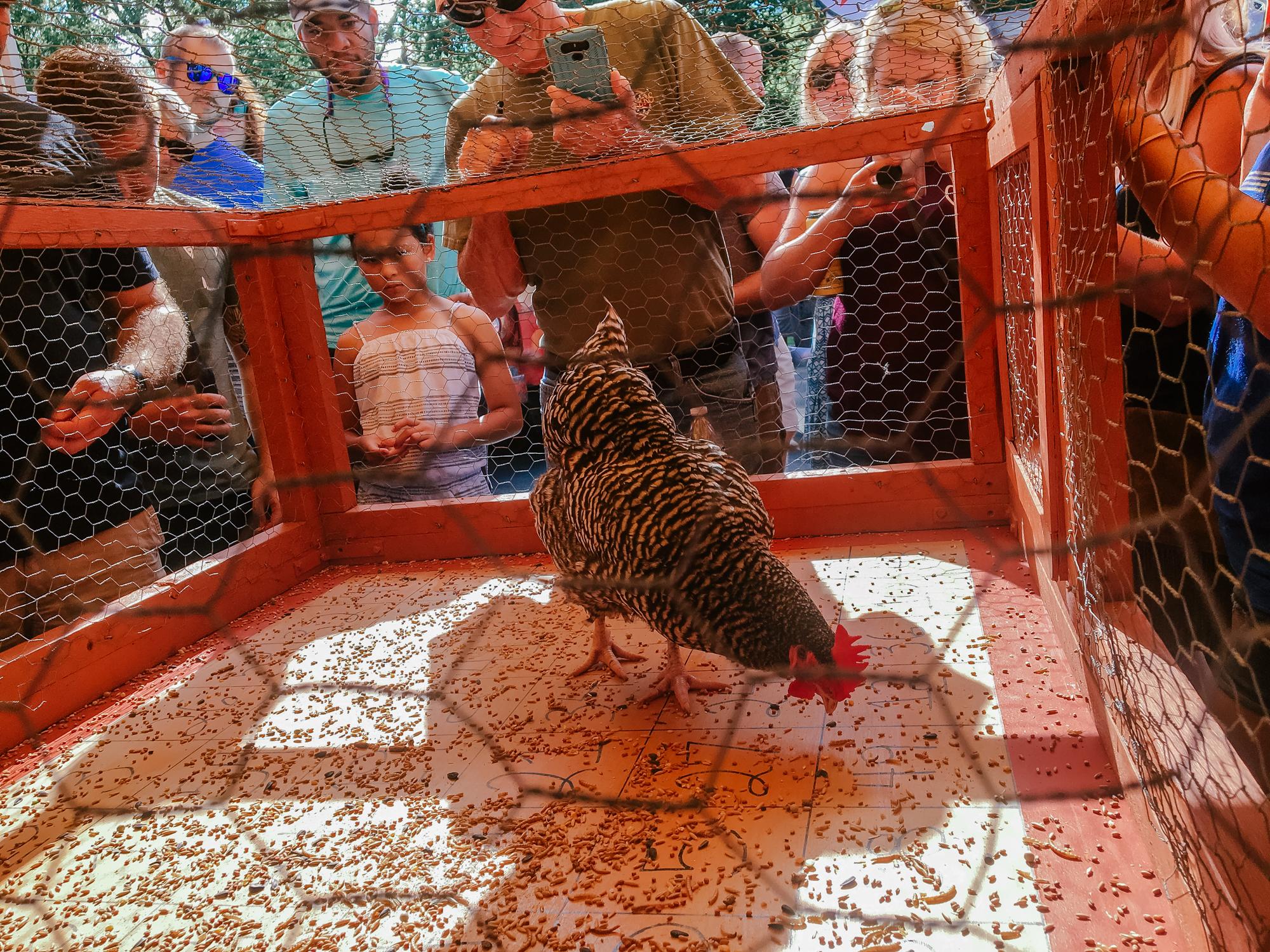 Chicken Shit Bingo - Austin